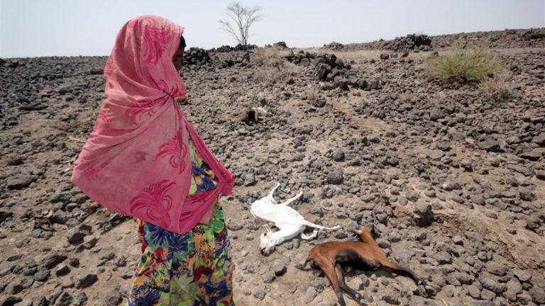L'Africa dimenticata: 20 milioni di persone rischiano di morire