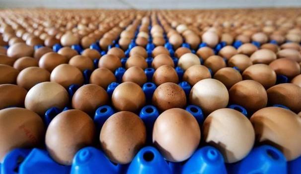 Uova contaminate da salmonella: ritirate uova fresche a rischio salmonella