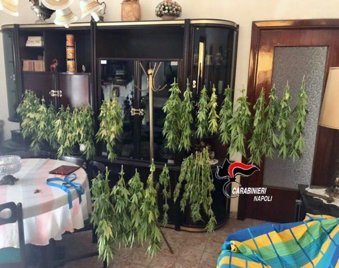 cannabis in salotto e terrazzo (2)