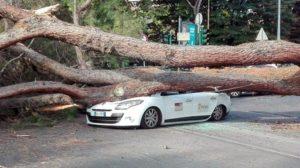 roma albero crolla su auto in centro