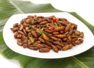 Novel food: gli insetti arrivano sulla tavola degli italiani.