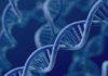 Cecità: da Pozzuoli arriva una svolta per la terapia genica
