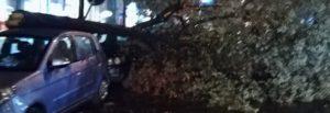 Cronaca di Napoli. Cade un albero zona Museo Archeologico