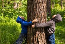 Domani la festa dell'albero alla Mostra d'Oltremare