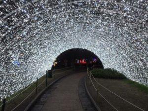 Luminarie di Salerno, la città brilla in vista del Natale