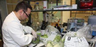 Terra dei fuochi, il report sull'agroalimentare smentisce gli allarmi