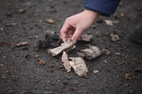 Caserta news. Il bambino aveva preso il petardo in mano raccogliendolo in strada e la forte deflagrazione ha provocato il distacco di due dita.