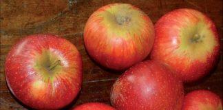 La mela annurca contro il colesterolo cattivo
