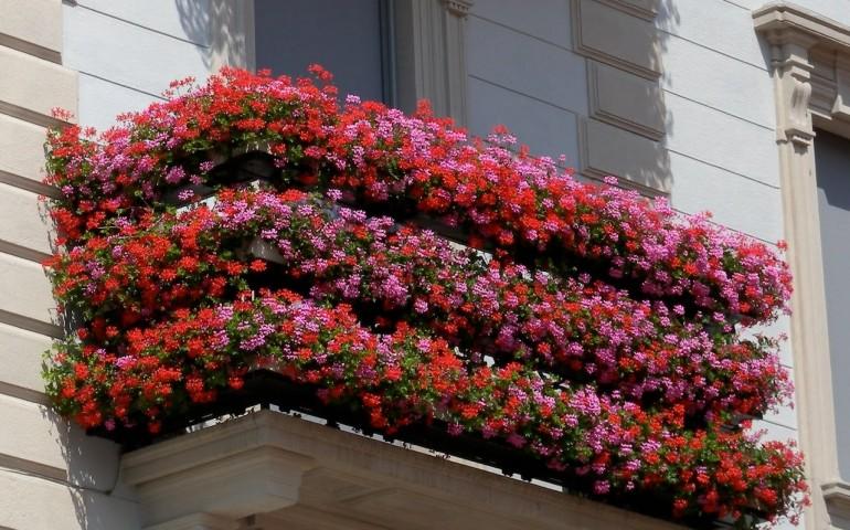 Benvenuta Prima-Vera: a Napoli la gara tra balconi e negozi in fiore