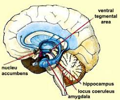 L' Alzheimer, nuove scoperte sul meccanismo che blocca la memoria