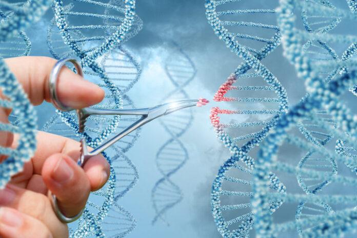 Infarto: Scoperta una nuova terapia genica che ripara il cuore