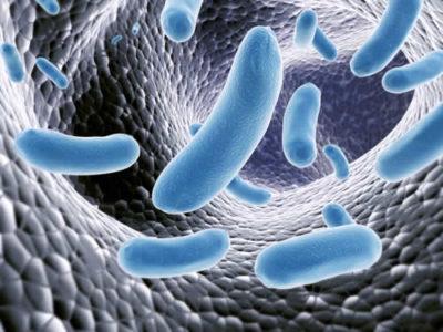 Il viaggiare in un altro Paese modifica la flora batterica intestinale