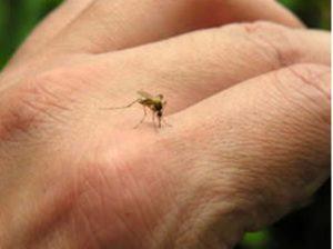 Zanzare: Perchè con il caldo pungono di più? Ecco come difendersi