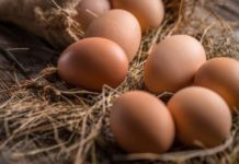 Un uovo al giorno fa bene al sistema cardiovascolare