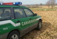 Palma Campania, sequestri e sanzioni da parte dei carabinieri