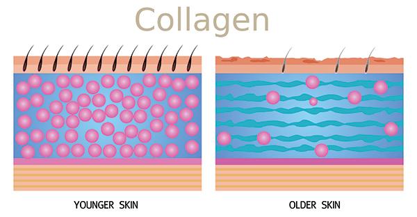 Il collagene, rappresenta la proteina più abbondante del tessuto connettivo, circa l'80% e si forma durante i processi di crescita dei tessuti.