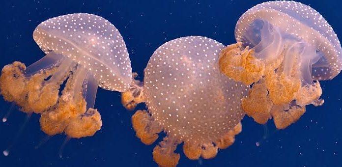 Punture di api, meduse e morsi di vipera: Come gestire l'avvelenamento