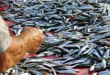 Il pescato di stagione fa bene alla salute ed alla tasca
