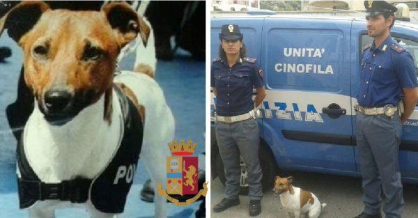 """Capri: controlli e arresti per droga con l'aiuto di """"Pocho"""""""