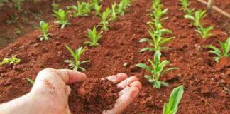 Agraria, i giovani italiani tornano nei campi ed il futuro si tinge di verde