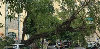 Comune di Napoli, 1700 alberi a rischio sono da abbattere