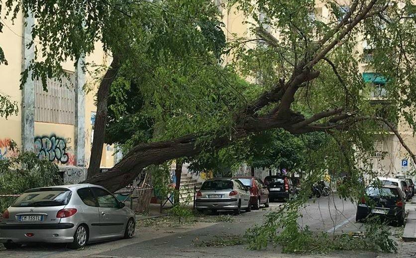 """Napoli, Gaudini (comm. Ambiente): """"5 milioni per piantare 5600 alberi nei parchi"""""""