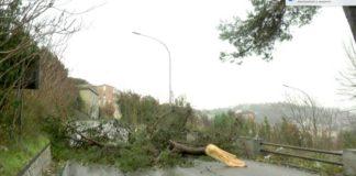 Sannio, albero su carreggiata dell'Appia: traffico in tilt