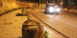 Napoli, Posillipo: un parassita sta costringendo ad abbattere i pini