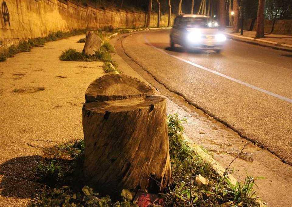 Comune di Napoli, nuovi fondi per piantumazione e sostituzione alberi malati