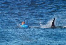 Australia, teenager assalito da 12 squali: è grave