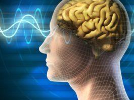 Australia, scoperta nuova area del cervello umano