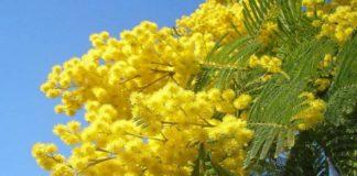 Festa della Donna 2019 a Napoli: ecco i principali eventi dedicati all'8 marzo
