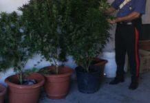 Pontelandolfo, cannabis coltivata ad uso familiare: tre denunce