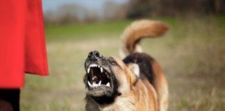 Cava de' Tirreni, aizza il cane contro il poliziotti durante un controllo