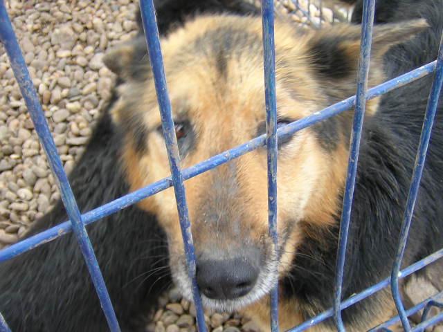 Orrore a Fuorigrotta e Soccavo: 2 cani maltrattati e abbandonati