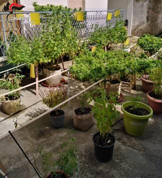San Marcellino, coltivavano marijuana in appartamento: due arresti