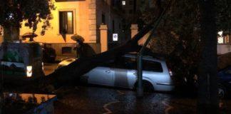 Napoli, tragedia sfiorata a Bagnoli: albero caduto su un'auto in sosta