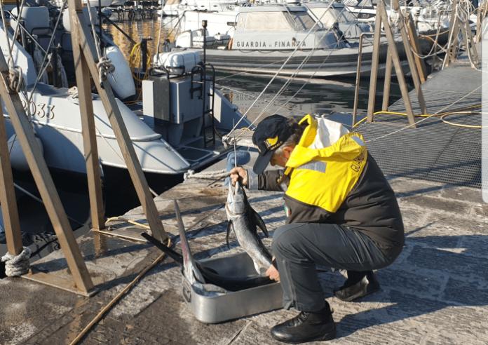 GdF: sequestrato pesce spada sottomisura nelle acque del Golfo di Napoli
