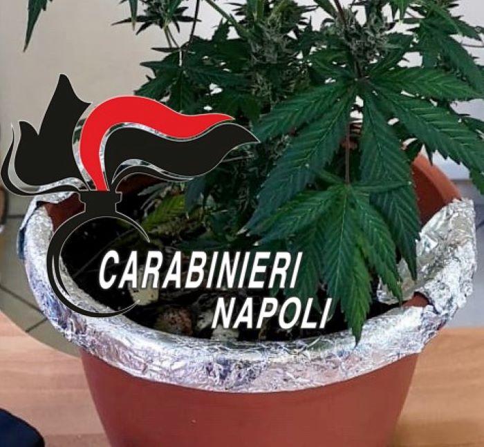 Scampia e Secondigliano, arrestati due pusher: I NOMI