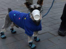 Psicosi da coronavirus, in Cina maschere anche per gli animali