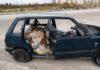 Ponticelli: Continua il degrado con rifiuti di ogni genere, animali morti e carcasse di auto