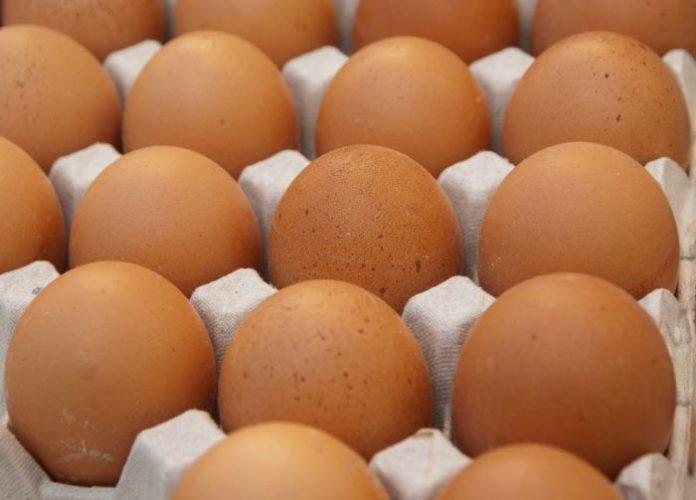 Rischio salmonella: 55mila uova distrutte e più di mille galline abbattute