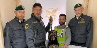 Teverola, Guardia di Finanza sequestra 4 kg di marijuana: un arresto