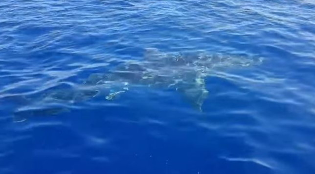 Australia, surfer girl gravemente ferita nell'attacco di uno squalo