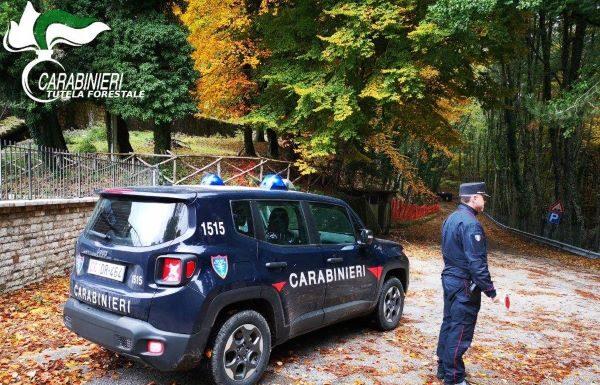 Parco Taburno-Camposauro: sanzioni dei Forestali per 720 euro