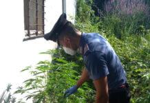 Licola di Pozzuoli: Servizi anti-droga. Carabinieri arrestano coniugi incensurati
