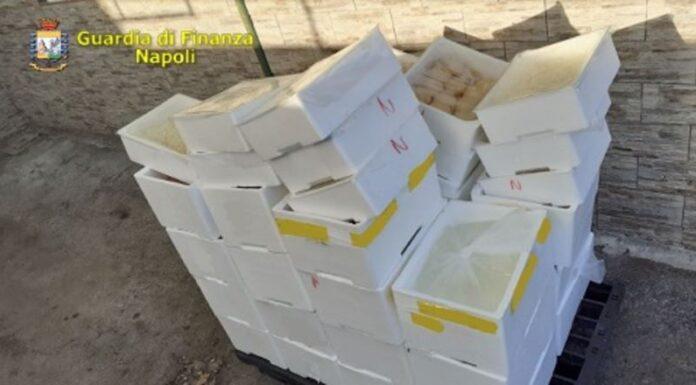 Azienda abusiva di prodotti lattiero-caseari a Ponticelli: sequestrata 1 tonnellata di mozzarella