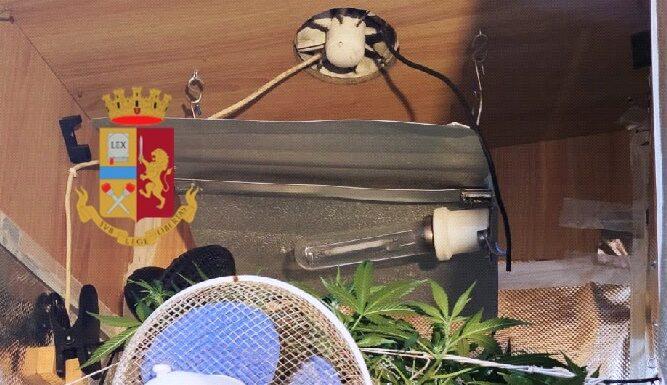 Ponticelli: serra di marijuana in casa, denunciato