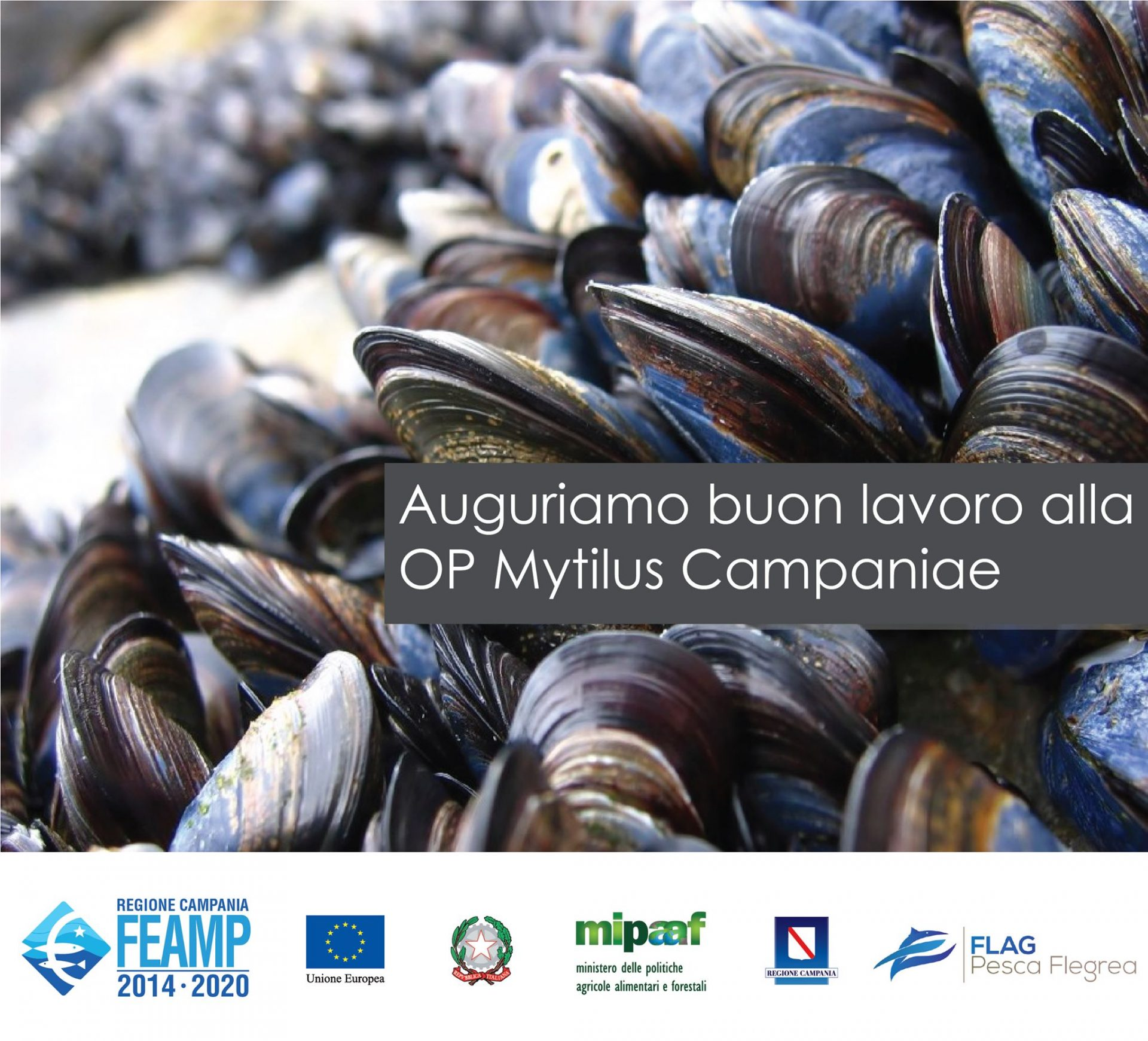A Bacoli nasce la prima organizzazione di produttori del settore della Mitilicoltura in Campania