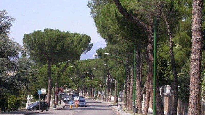 """Benevento, """"pericolo abbattimenti generalizzati"""": la Procura sequestra 352 alberi"""